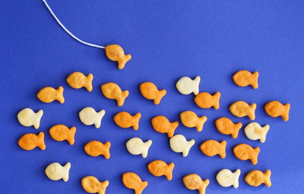 Picture fish, background, fishing, cookies, crackers