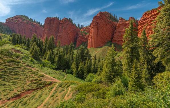 Picture trees, rocks, slope, Kyrgyzstan, Vladimir Ryabkov, The Gorge Jety-Oguz