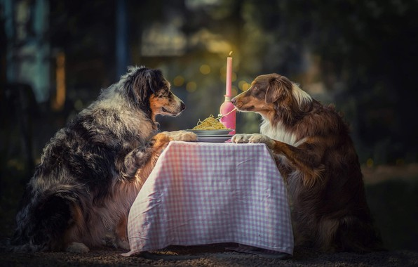 Picture animals, dogs, table, candle, pair, plates, spaghetti, bokeh, Aussie