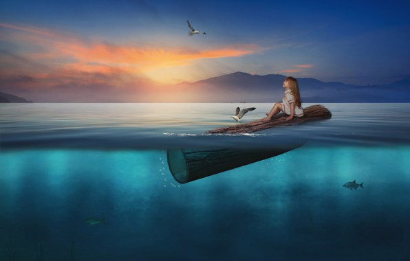 Picture water, fish, sunset, birds, seagulls, the situation, girl, log