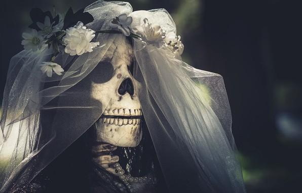 Picture skull, the bride, veil