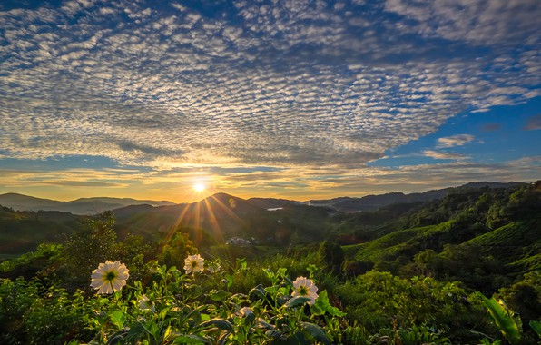 Picture clouds, sunset, flowers, mountains