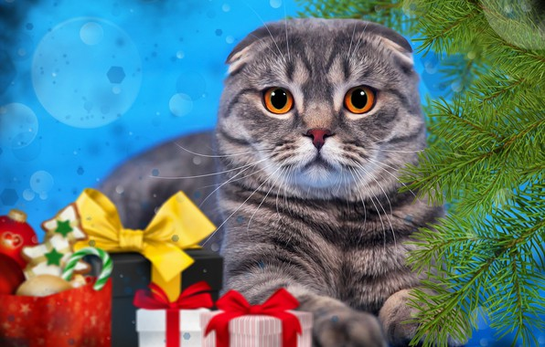 Picture cat, cat, branches, background, new year, spruce, gifts