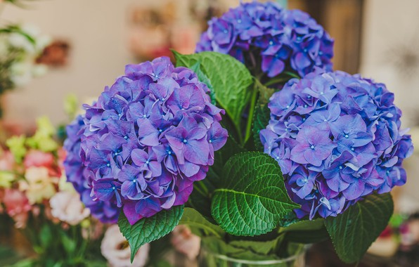 Picture leaves, flowers, background, room, bouquet, lilac, bokeh, hydrangea