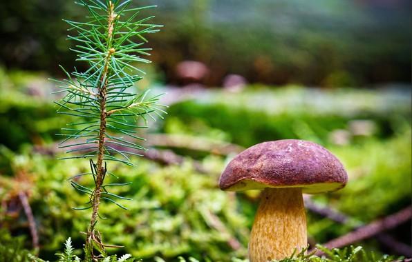 Picture grass, photo, mushroom, branch