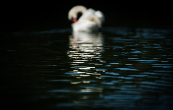 Picture wave, water, macro, surface, glare, reflection, shadow, ruffle, Swan, the dark background
