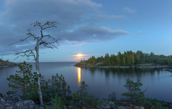Picture trees, lake, Russia, Lake Ladoga, Karelia, Ladoga, white night