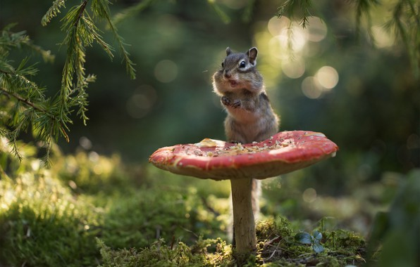 Picture forest, branches, mushroom, moss, mushroom, Chipmunk, bokeh, rodent, pet