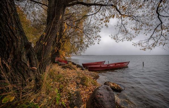 Picture autumn, trees, landscape, nature, lake, stones, foliage, boats, Andrei, Pleshcheyevo, Pereslavl-Zalesskiy