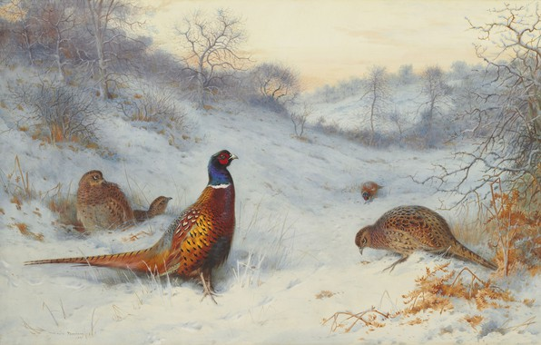 Picture 1909, Scottish painter, Archibald Thorburn, Pheasant in the snow, Scottish painter, Pheasant in the snow, …