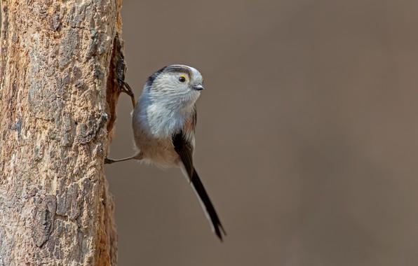 Picture tree, bird, bird