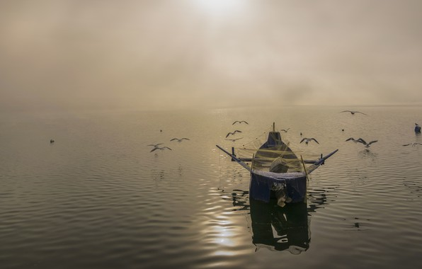Picture the sky, water, light, birds, network, fog, lake, glare, reflection, river, dawn, boat, fishing, seagulls, …