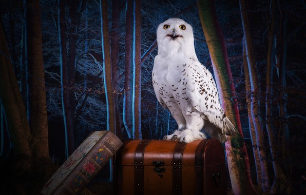 Picture forest, look, trees, night, darkness, owl, collage, bird, magic, photoshop, the theme, treatment, book, white, …