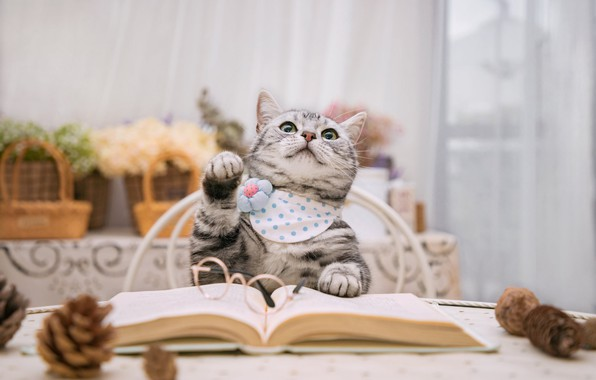 Picture cat, table, book