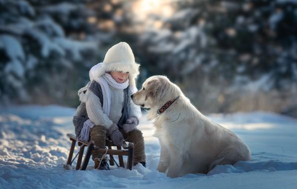 Picture winter, snow, dog, boy, sled, Golden Retriever