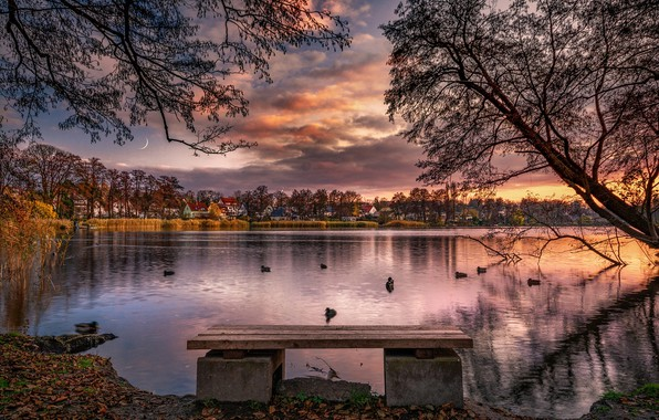 Picture autumn, clouds, trees, landscape, sunset, birds, nature, pond, duck, home, a month, shop, Bank