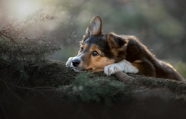 Picture look, branches, mood, dog, face, bump, Svetlana Pisareva