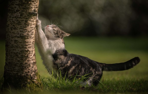 Picture cat, grass, cat, tree, trunk, bokeh, cat, scratching post