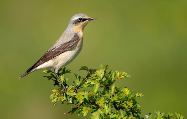 Picture bird, branch, bird