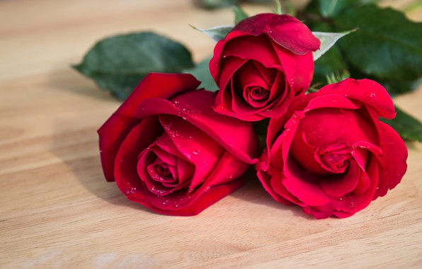Picture flowers, roses, bouquet, red, red, buds, flowers, romantic, roses