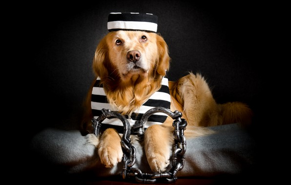 Photo wallpaper each, dog, prisoner