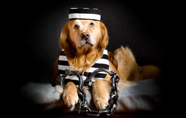 Photo wallpaper each, prisoner, dog