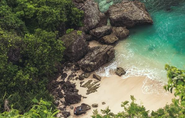 Picture trees, sea, landscape, Beach, nature, rocks, sand, plants, cliff, top view