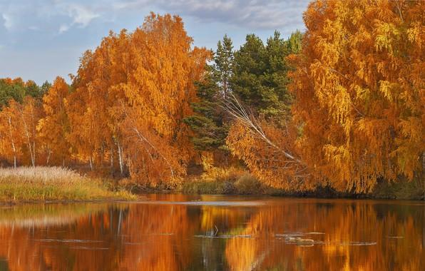Picture autumn, forest, trees, lake, Russia, Oleg Bogdanov