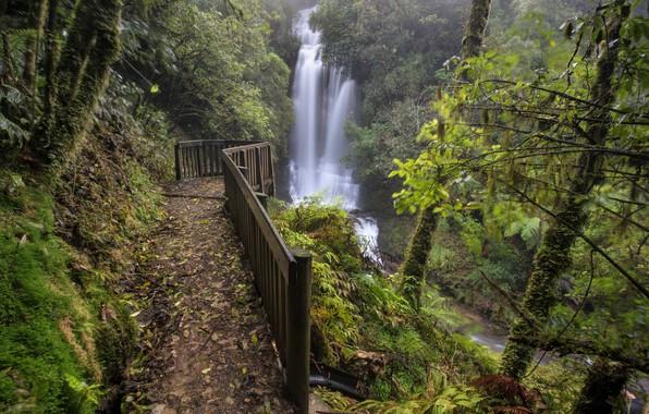 Picture forest, trees, waterfall, New Zealand, cascade, New Zealand, Waitanguru Falls, Piopio