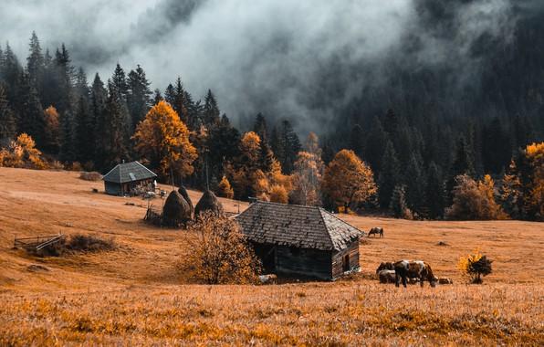 Picture autumn, nature, fog, farm