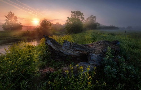 Picture summer, the sun, rays, trees, sunset, nature, river, Russia, Andrei