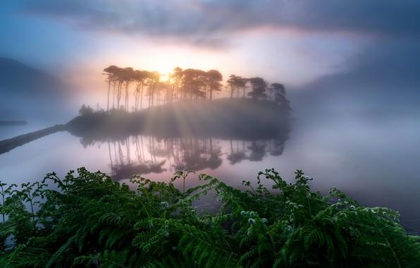 Picture night, lake, island, ferns