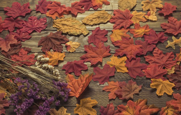 Picture autumn, leaves, background, colorful, wood, background, autumn, leaves, autumn, maple
