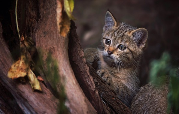 Picture cat, look, face, leaves, nature, pose, the dark background, kitty, tree, legs, baby, trunk, bark, ...