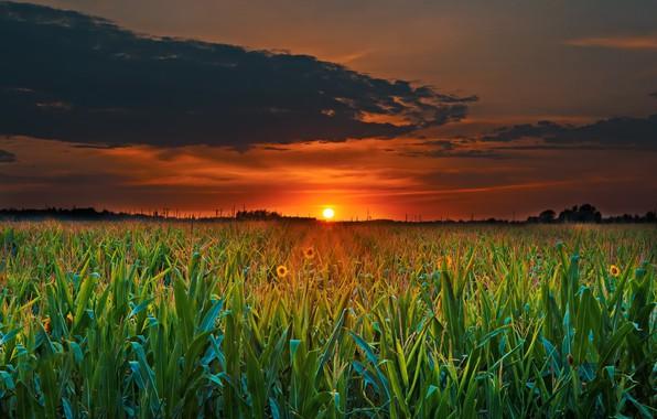 Picture Nature, Landscape, Sunset, Field