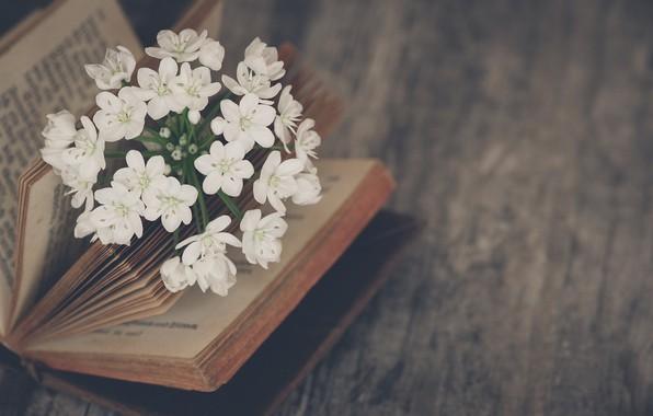Picture flowers, mood, book, Jasmine