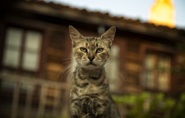 Picture cats, cats wallpapers, Bulgaria, cute cat, Nessebar