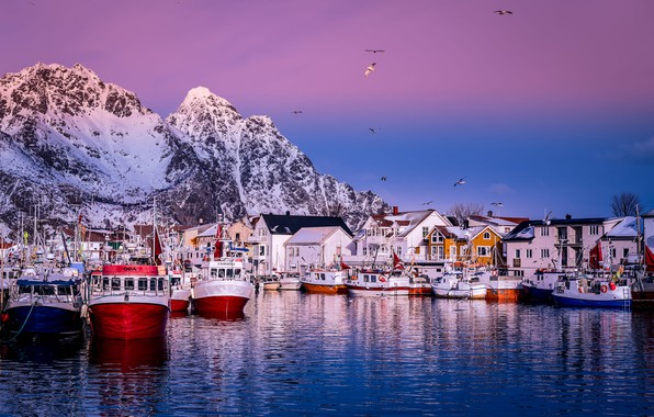 Picture sea, landscape, mountains, birds, rocks, coast, Marina, home, ships, boats, morning, pier, village, Norway, The …