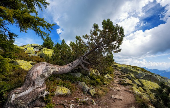 Picture Nature, Tree, Mountains, Trail, Stones, Pine