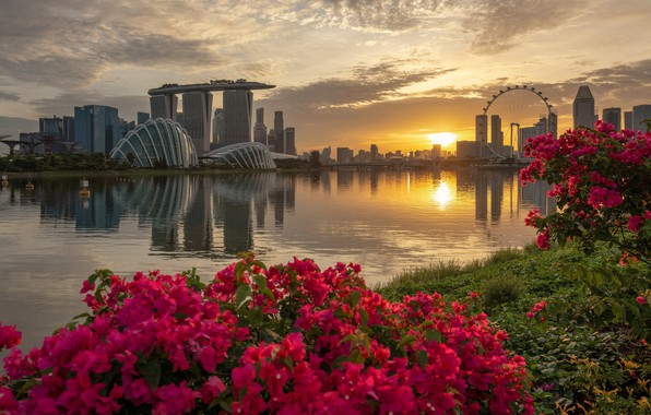Picture flowers, the city, Singapore, Singapore