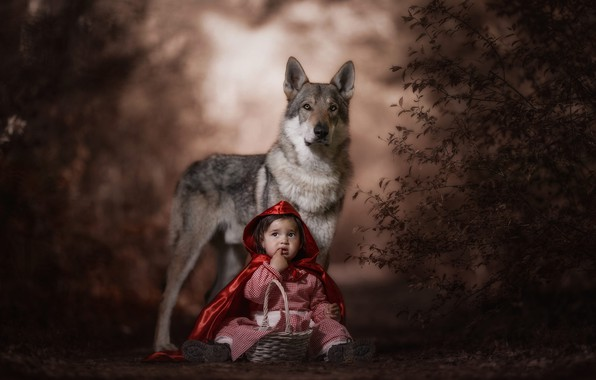 Picture forest, look, face, red, pose, the dark background, grey, mood, basket, wolf, child, the situation, …