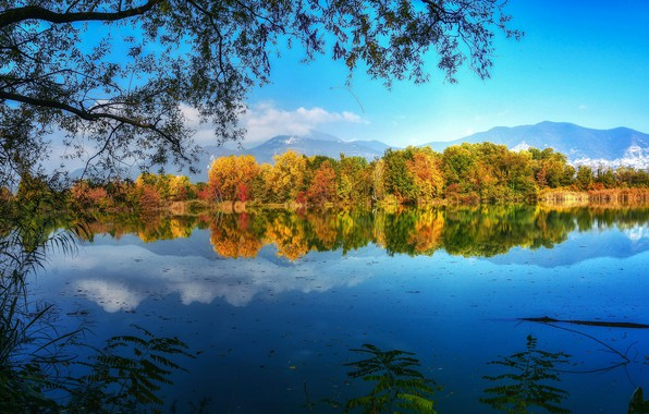Picture autumn, trees, branches, lake, reflection