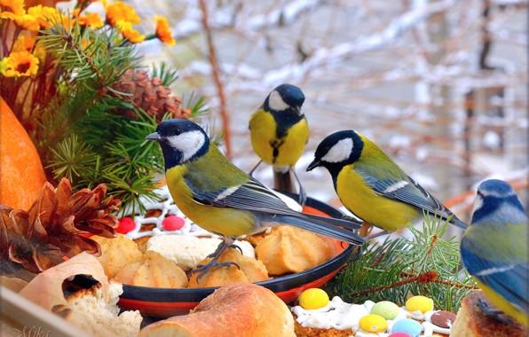Picture Flowers, Birds, Birds