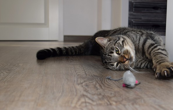Picture cat, cat, look, pose, house, grey, room, toy, the game, paws, mouse, mouse, tail, claws, …