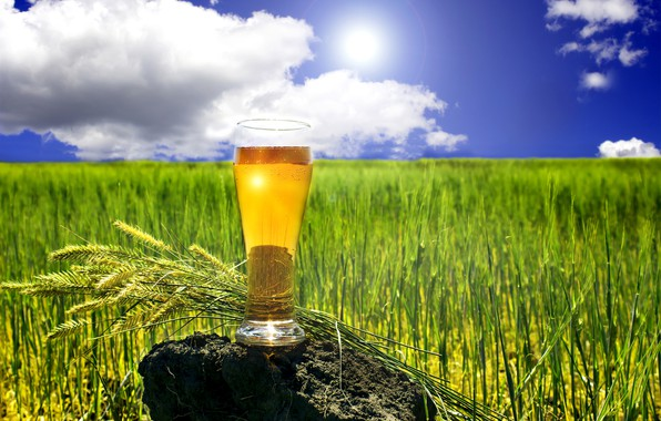 Picture field, summer, the sky, grass, the sun, clouds, glass, stone, beer, horizon, spikelets, bokeh