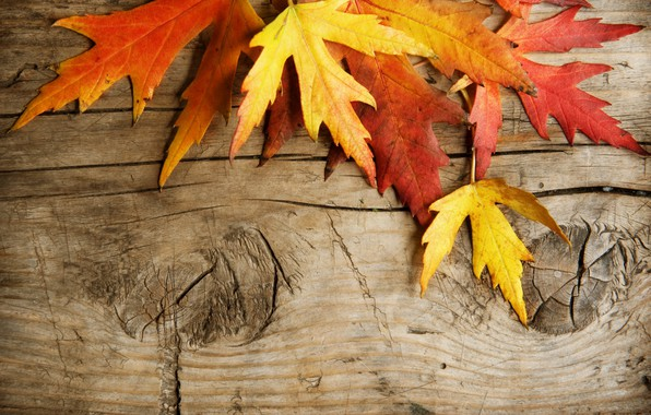 Picture leaves, Board, autumn leaves