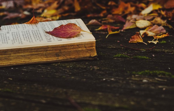 Picture autumn, leaves, nature, notes, the dark background, Board, yellow, red, book, falling leaves, old, fallen, …