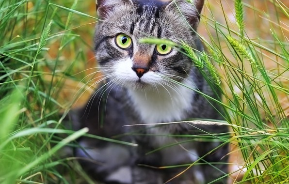 Picture greens, cat, weed, cat