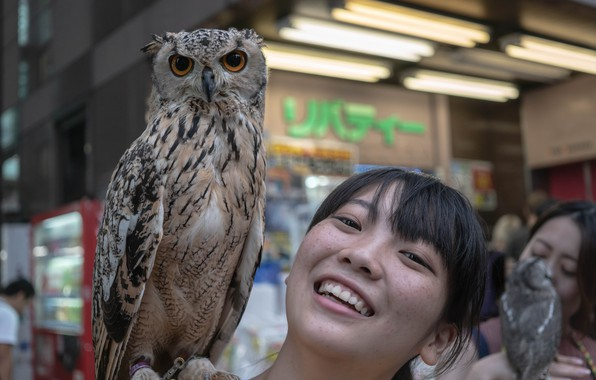 Picture girl, smile, owl, East