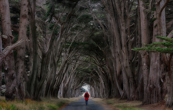 Picture road, trees, people